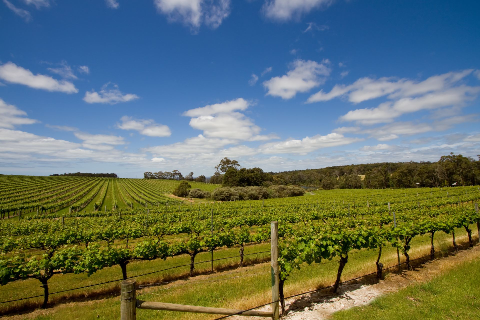 Margaret river region