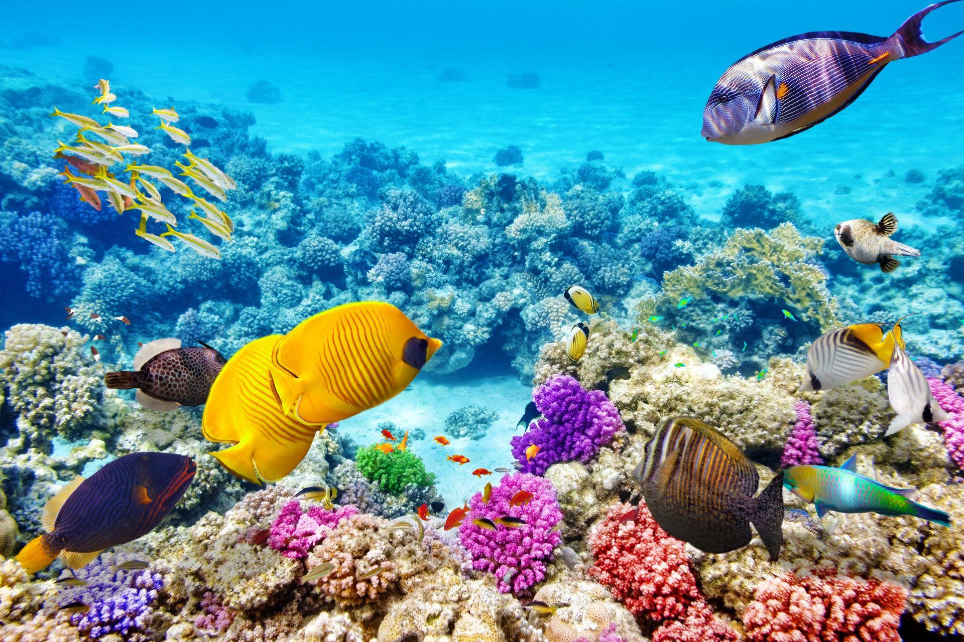 velky barierovy utes, koralovy utes